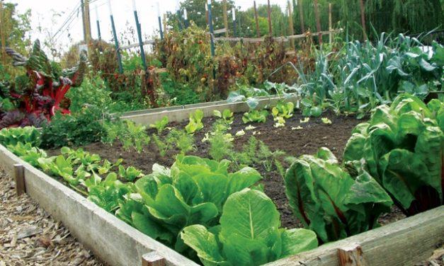 Alameda Backyard Growers Urges People to Plant