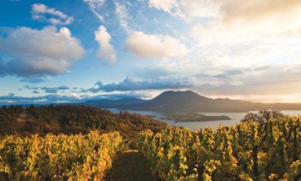 Lake County Turns Heads With Sauvignon Blancs