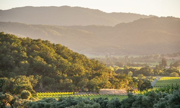Charmed by the Wine Country