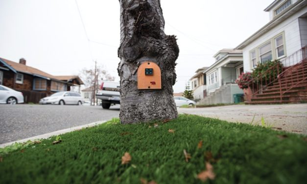 Mouse or Fairy Doors Spring Up in Alameda