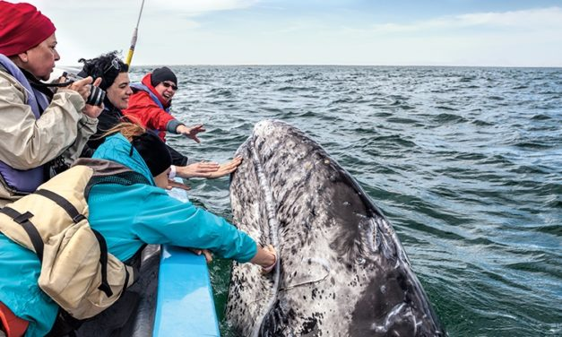 Winter Is Perfect for Whale Watching