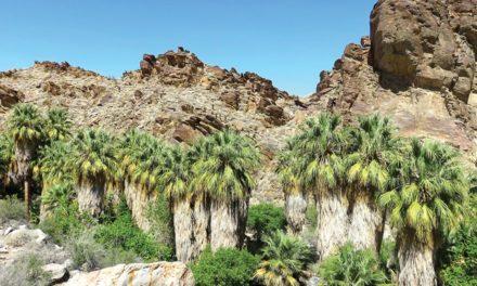Basking is Mandatory in Palm Springs