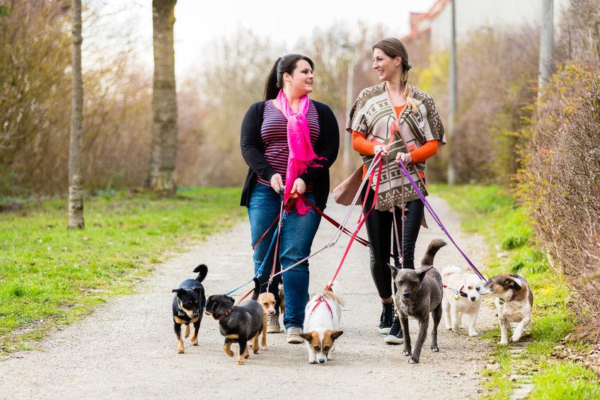 Top 4 Best Dog Walkers in Alameda